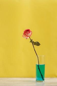 푸른 물과 노란색 배경이 있는 유리 안에 장미