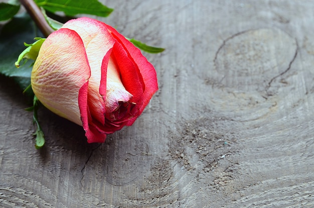 Rose on old wood with copy space.