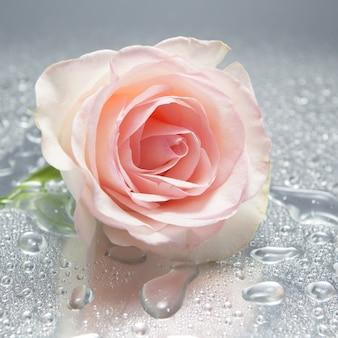 濡れた背景にバラ