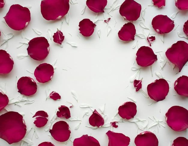 Лепестки роз с копией пространства на белом, плоская планировка
