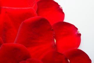 Rose petals, feelings