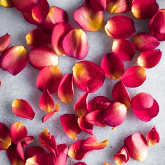 Rose petals on marble background floral decor and wedding flatlay holiday greeting card backdrop for...