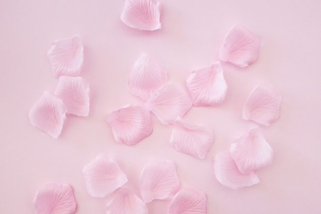 Rose petals on pink background