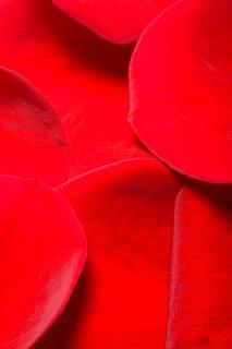 Rose petals, ring
