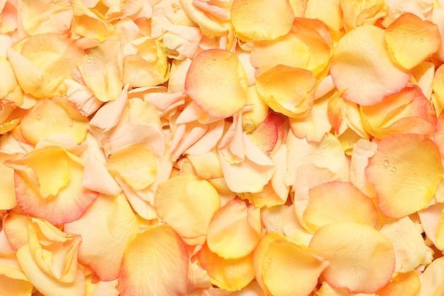 水滴とバラの花びら-背景