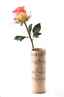 Rose in sheet music over white