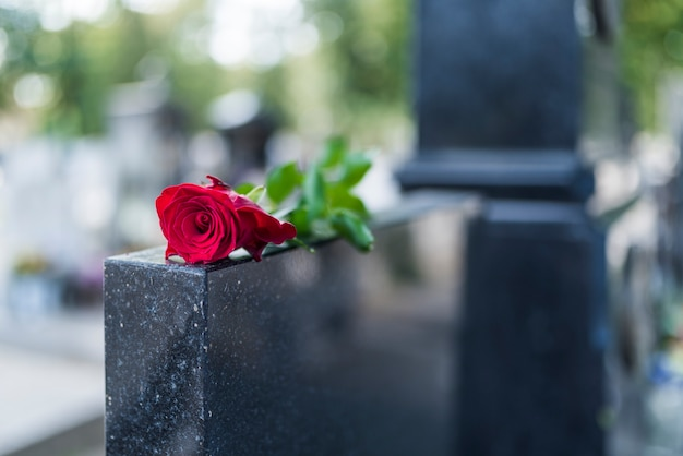 Rose on tombstone. red rose on grave. love - loss. flower on memorial stone close up. trag