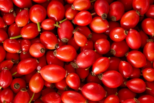 Rosehip berry close-up