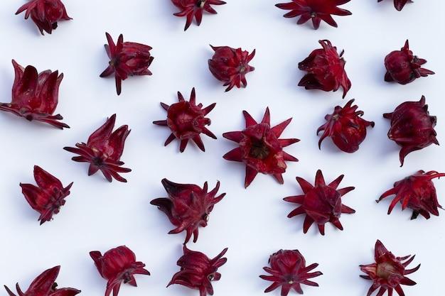 Roselle flower isolated on white background.