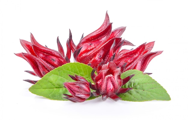 Roselle fruits, isolated