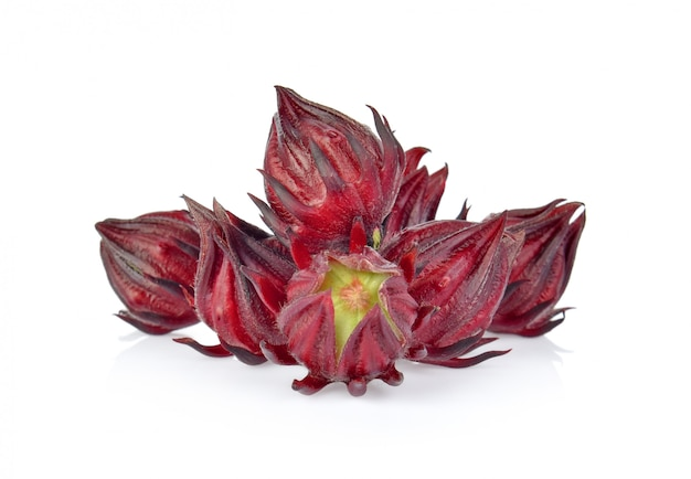 Roselle hibiscus on white background