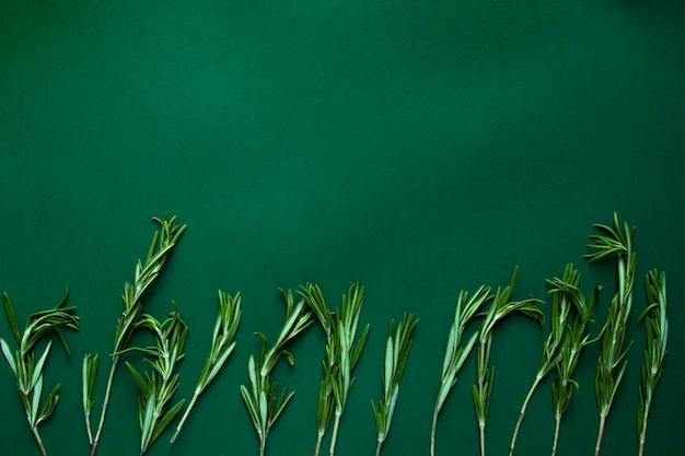 Ветви розмарина на зеленом фоне. flatlay, вид сверху. копировать пространство