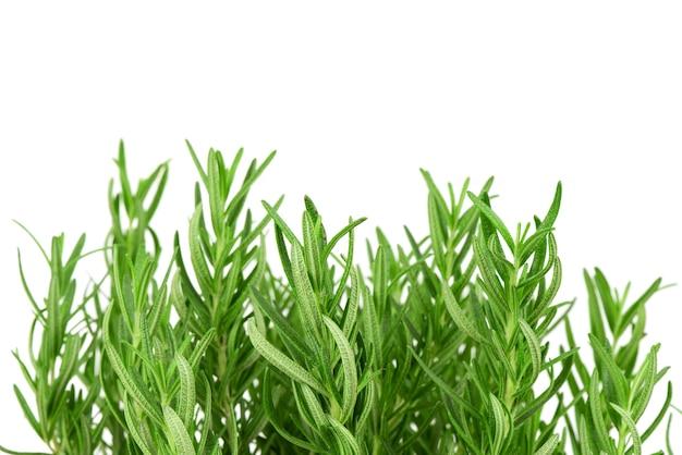 Изолированные цветки розмарина и зеленые листья.