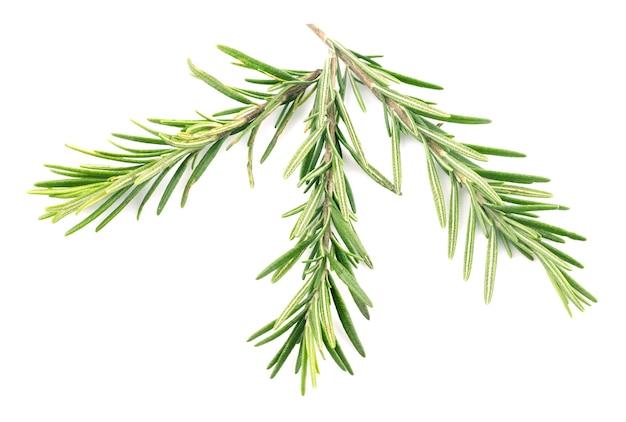 Rosemary isolated on white,