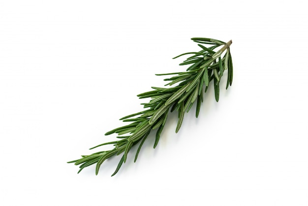 Rosemary on isolated white