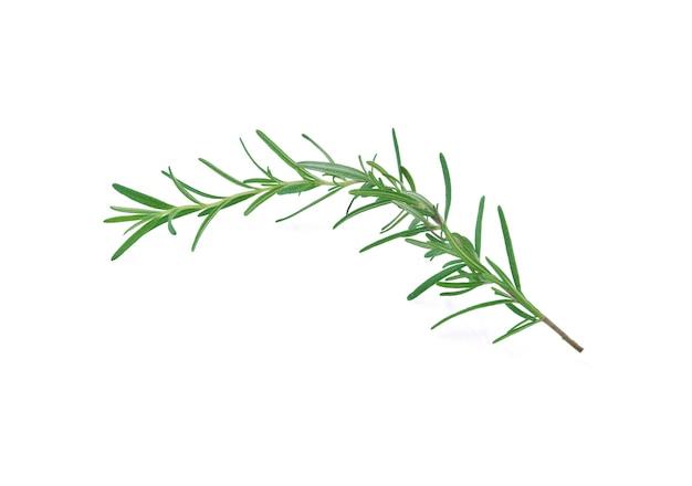 Rosemary isolated