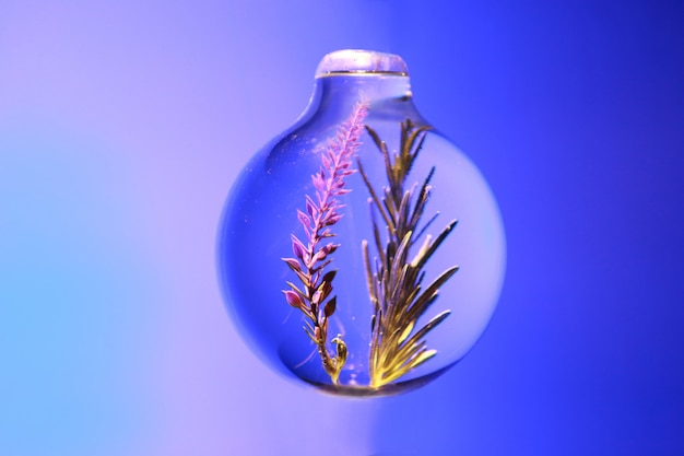 Rosemary in a sphere glass jar
