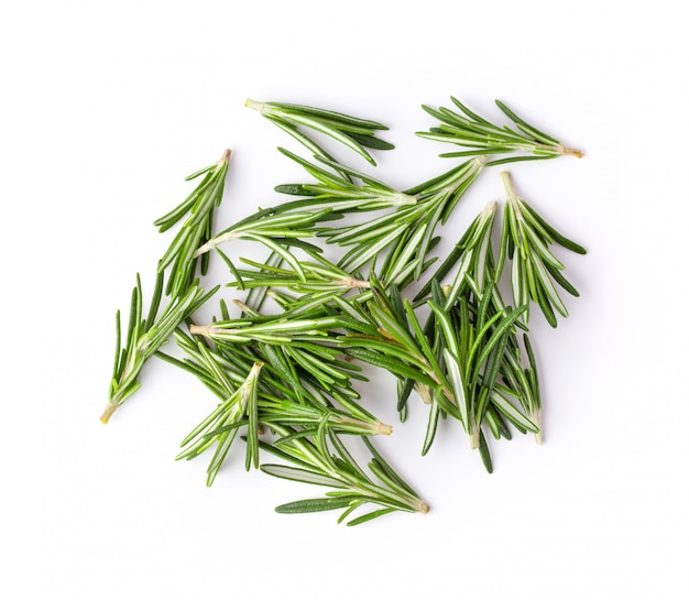 Rosemary on white wall