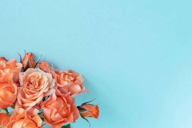 Roses on a blue background.