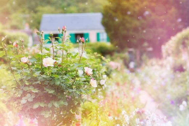 Розы перед коттеджем в живописной деревне во франции