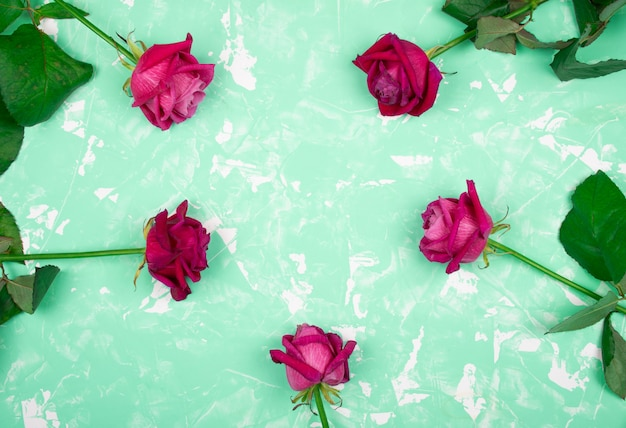 Roses on a marble background of neo mint color