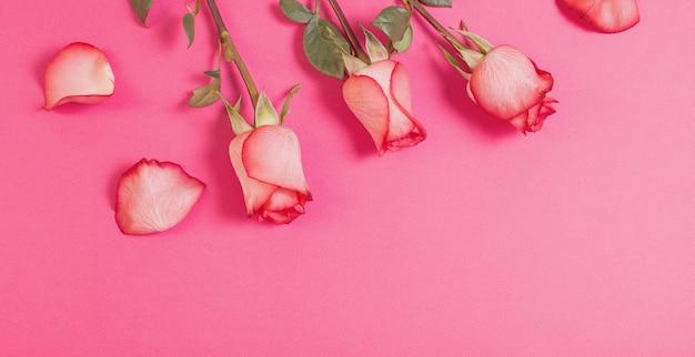분홍색 종이 배경에 장미