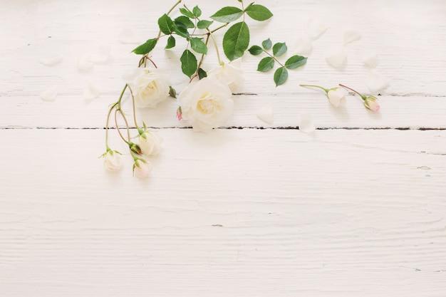흰색 나무 배경에 장미