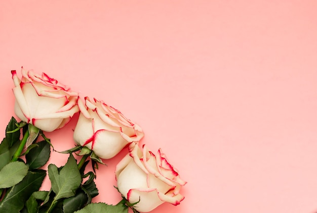 Roses on pink background with place for text