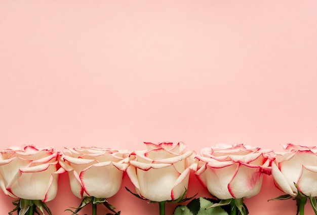 Roses on pink background with place for text.