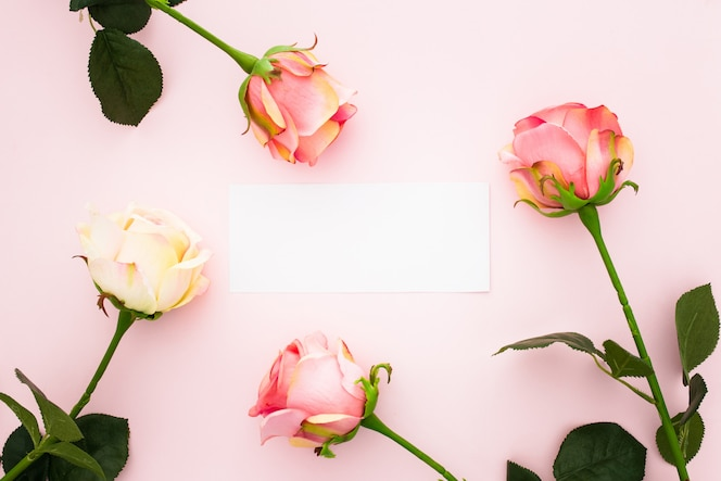 Roses on pink with a empty greeting card