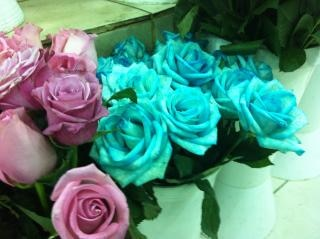 Roses  pink