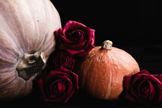 Roses with pumpkins on black background