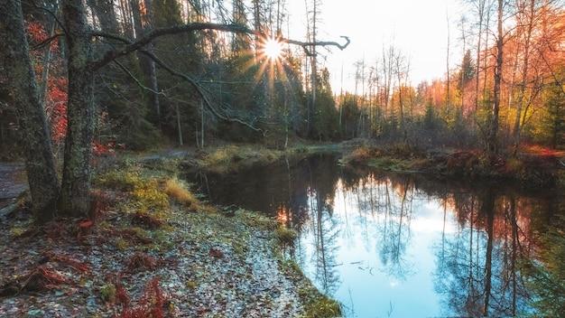 Roshinka river in lindulovskaya grove on a sunny autumn day