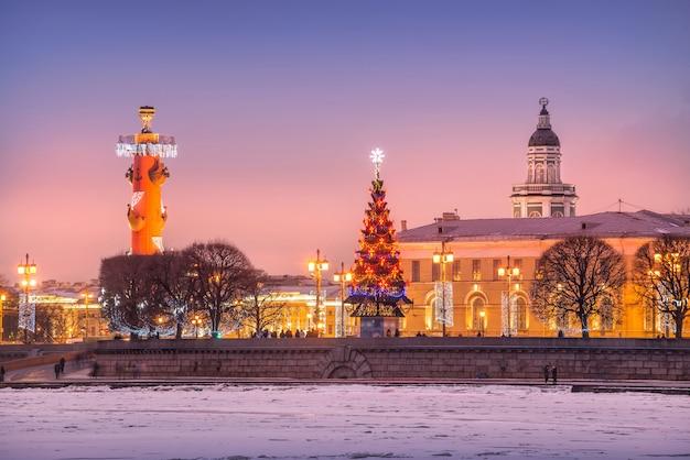 Ростральная колонна, ель и кунсткамера возле биржи в санкт-петербурге в зимнюю сиреневую ночь