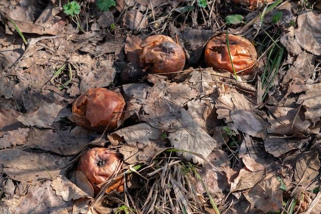 정원에서 썩은 사과