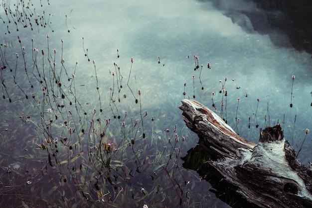Гнилой поваленный ствол дерева плывет в спокойной воде среди богатой флоры.