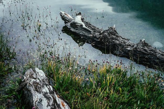 Гнилой поваленный ствол дерева плывет в спокойной воде у берега с богатой флорой