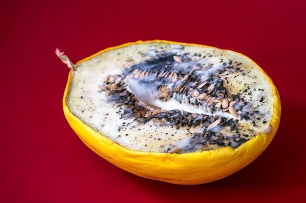 과육에 곰팡이가 자라는 썩은 멜론. 멜론에 파란색과 검은색 곰팡이가 있습니다. 상한 음식.