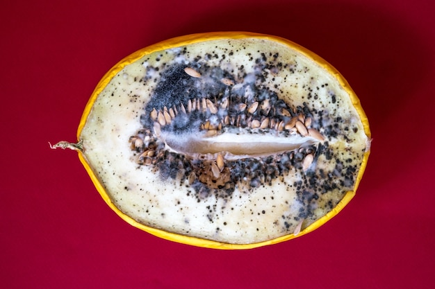 Rotten melon with fungus growing on the pulp.blue and black mold on melon. spoiled food.