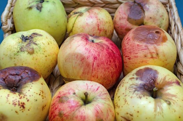 クローズアップ、甘やかされて育った果物で腐ったいリンゴ
