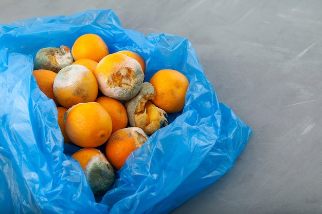 Rotting tangerines in blue plastic bag on grey