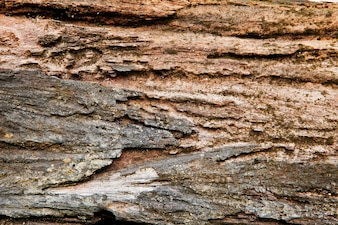 Rotting wood from termites for background and texture