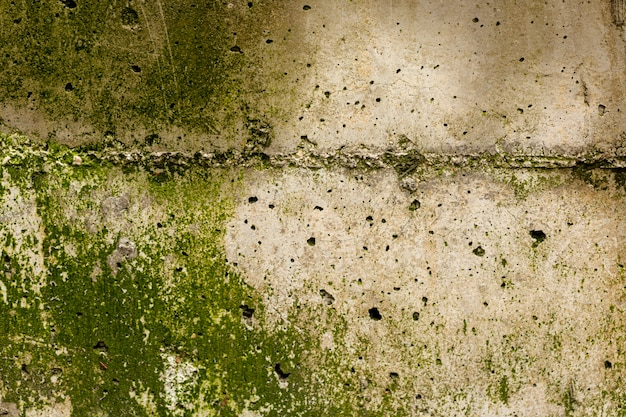 Rough concrete surface with moss