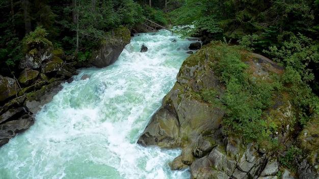 거친 산 강 숲 빽빽한 초목 돌 이끼 야생 생물