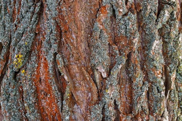 Rough surface of tree bark. interesting background.