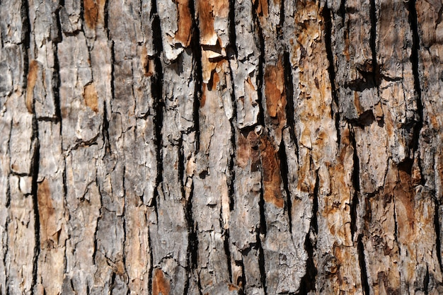 古い木の樹皮-茶色の表面の背景の大まかなテクスチャ