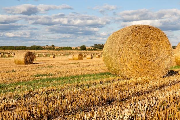 穀物を収穫した後、畑に残った丸い円筒形のわらの山