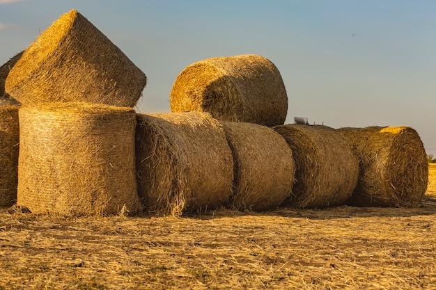 Круглые тюки сена лежат и сидят на других тюках на поле скошенной пшеницы на фоне неба.