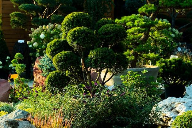 조경용 꽃이 달린 둥근 덤불과 잘린 선택 관목