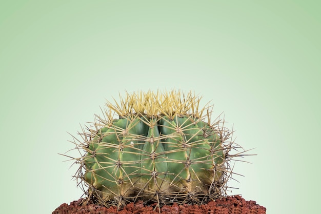 Round cactus with minimal style and pastel green background